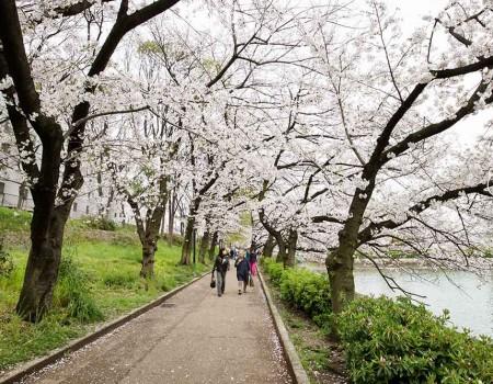 Kema Sakuranomiya Park in Osaka 大阪毛馬櫻之宮公園
