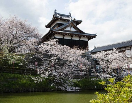 Famous Castle in Nara for Cherry Blossom