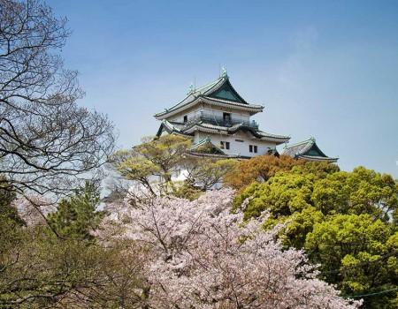 Cherry Blossom at Wakayama Castle