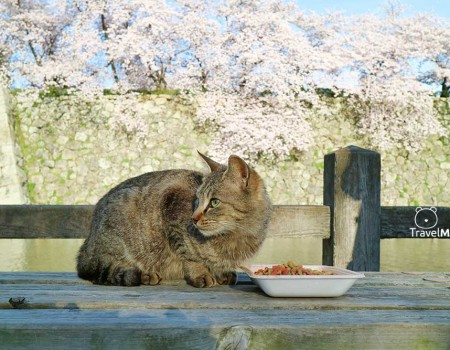 Delightful Meal in Spring