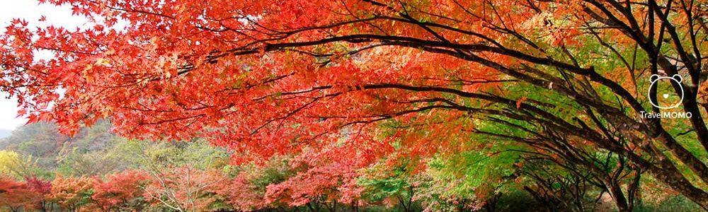 Baekyangsa Temple: More Autumn Foliage