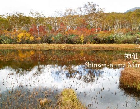 Autumn Foliage in Shinsen Marsh