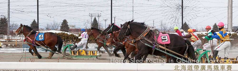 The World's Only Horse Sled Racing