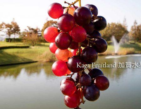 石川縣一年四季摘水果