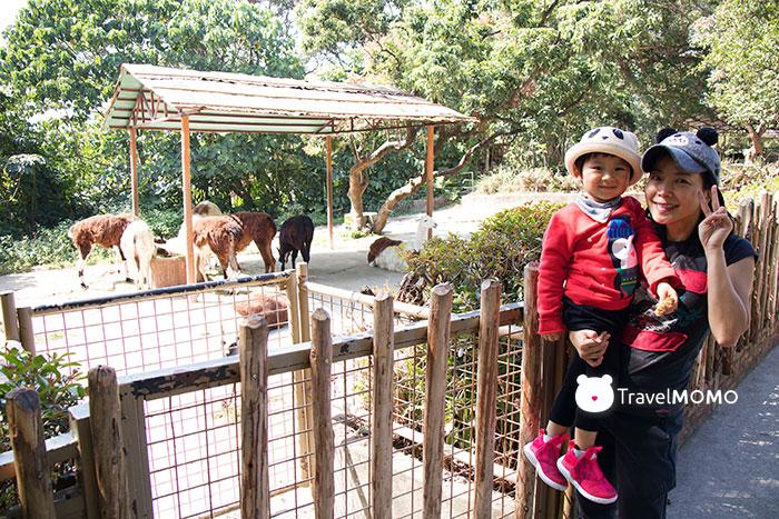 Shenzhen Safari Zoo 深圳野生動物園